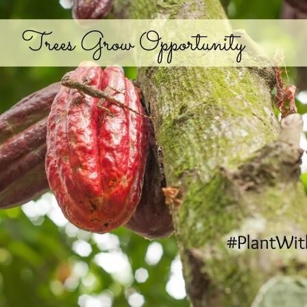 Trees Grow Opportunity : Root 7 campaign