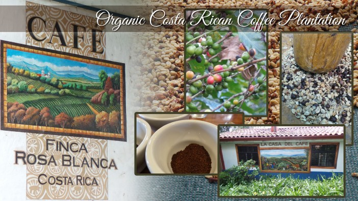finca-rosa-blanca-coffee-tour