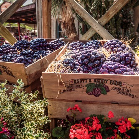 Knott's Berry Farm's Boysenberry Festival! *Giveaway*