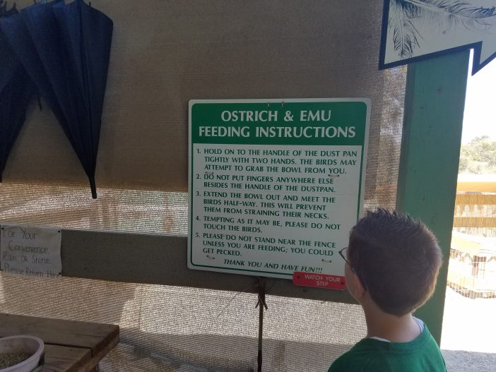 rules at ostrichland for feeding the ostriches