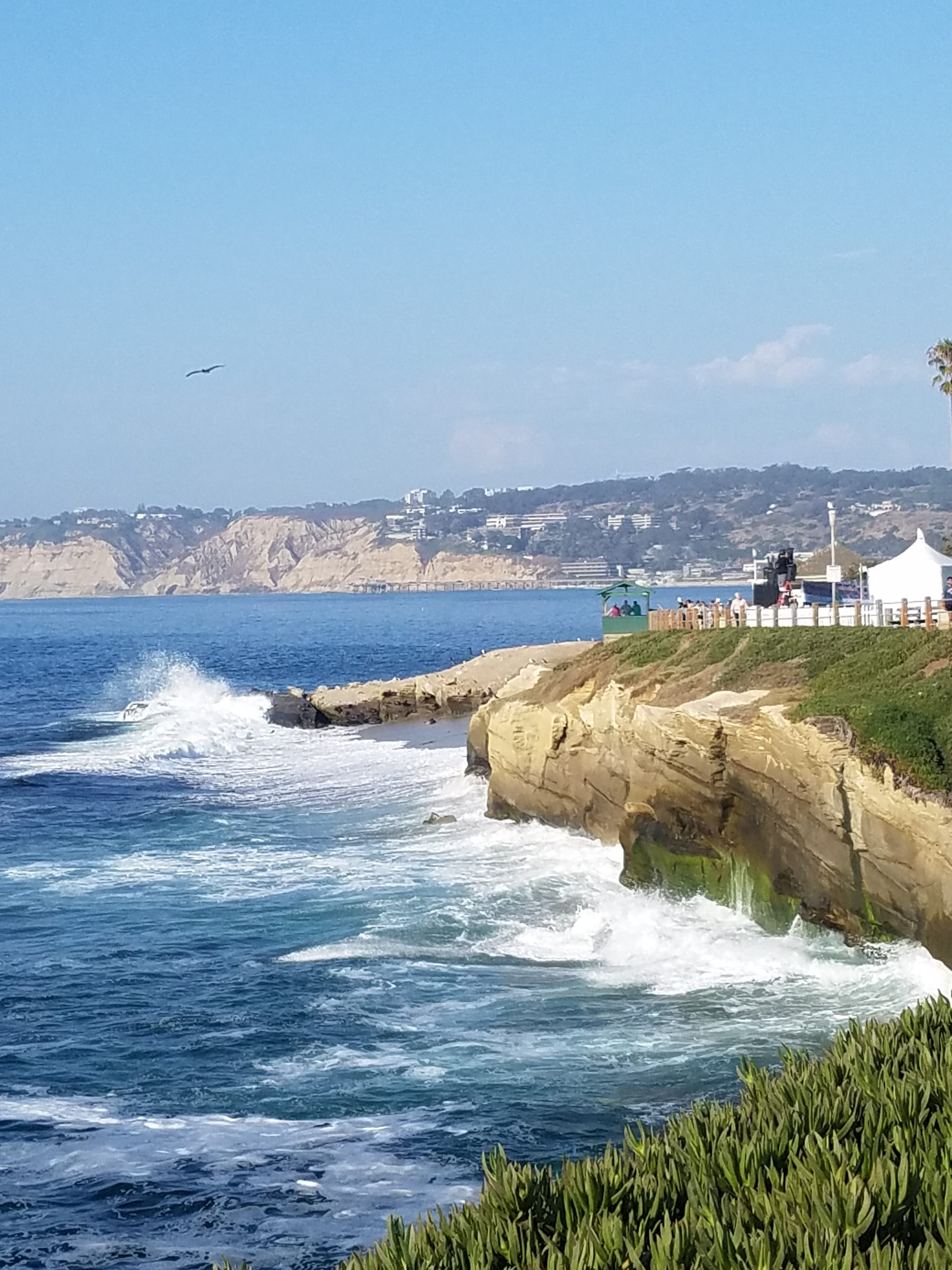 10 pictures that are going to make you want to take a family vacation to La Jolla right now!