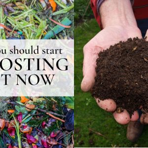 Reasons you should start composting right now.