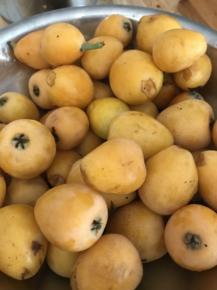 what is a loquat
